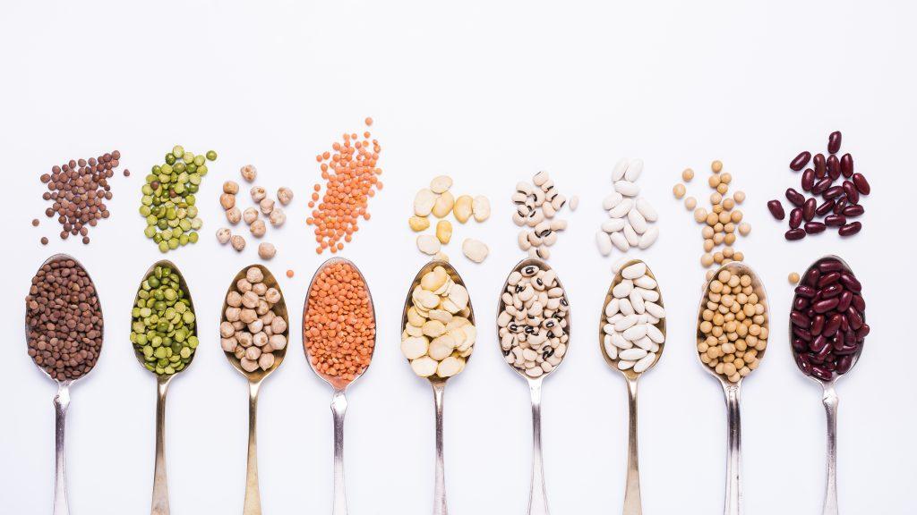 Les légumineuses sont riches en protéines végétales